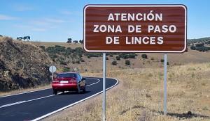 lince-carretera