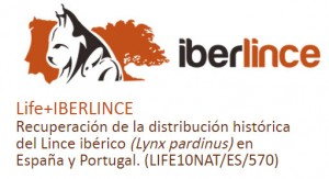 iberlince