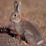 El Consejo Extremeño de Caza propone la posibilidad de adelantar un mes el cierre de la temporada de caza menor