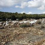 Castilla-La Mancha: Agricultura abre el plazo para solicitar los 20 millones de euros en ayudas a las zonas de montaña o con dificultades