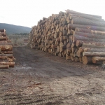 Extremadura: Medio Ambiente otorga casi 2,2 millones de euros en ayudas a 339 beneficiarios para ordenar montes
