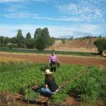 El Ministerio de Agricultura, Alimentación y Medio Ambiente establece las bases reguladoras para la concesión de Premios de Excelencia a la Innovación para Mujeres Rurales