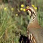 La media veda de caza comenzará en Castilla y León el 15 de agosto y se cerrará el 18 septiembre