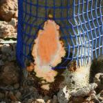Aprobada la emergencia cinegética por daños de conejos en cinco provincias andaluzas