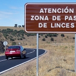 Life+Iberlince trabaja para minimizar las muertes de linces en carreteras