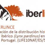 El proyecto Iberlince evalúa las actuaciones realizadas para reducir los atropellos de lince