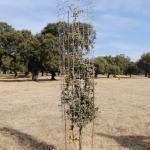 Castilla-La Mancha. Se convocan ayudas para la reforestación y creación de superficies forestales